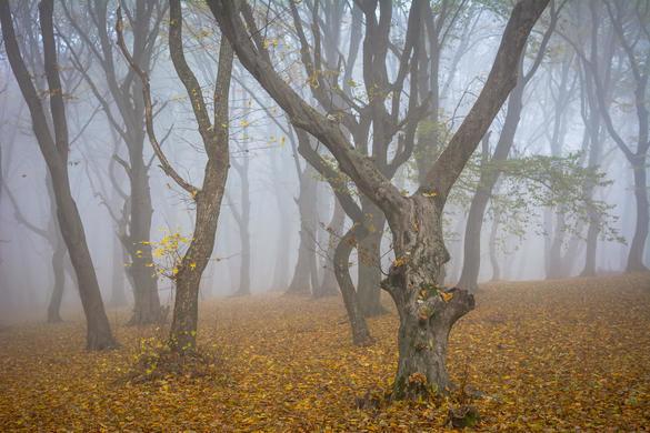 Hoia-Baciu Forest Romania