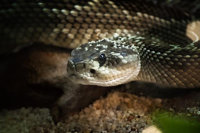 reptile-5043671_640