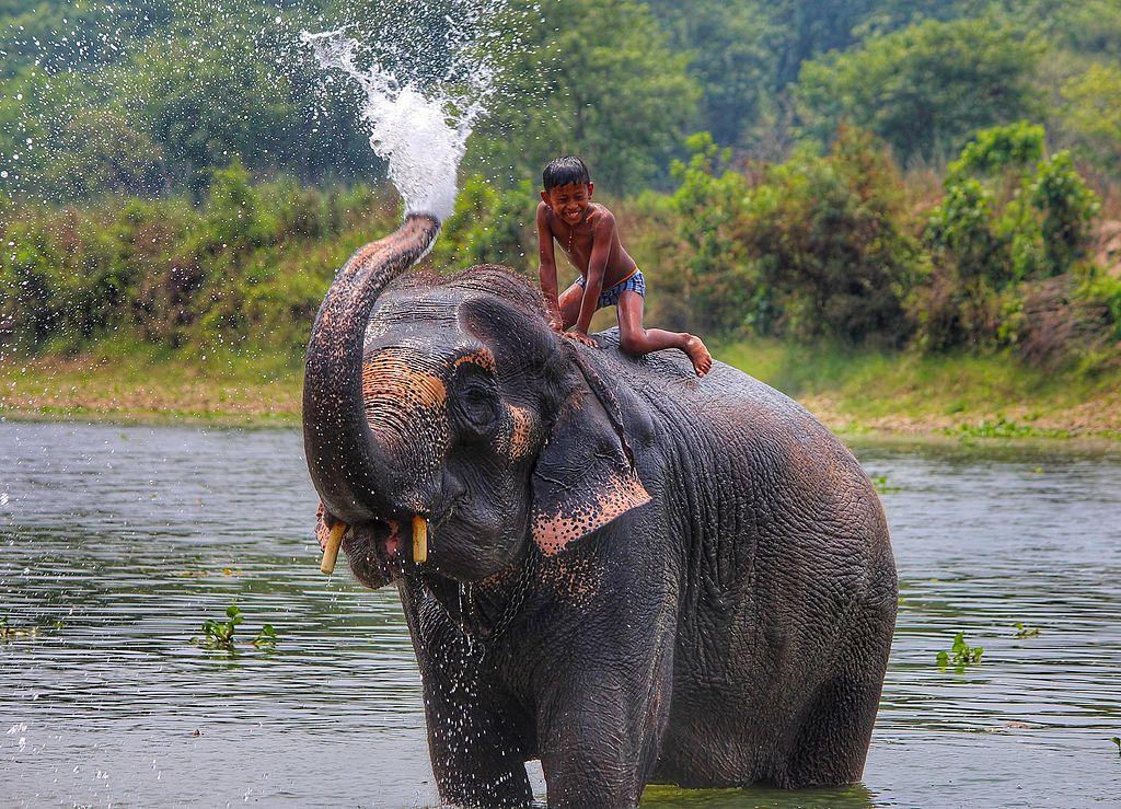 Chitwan_national_Park