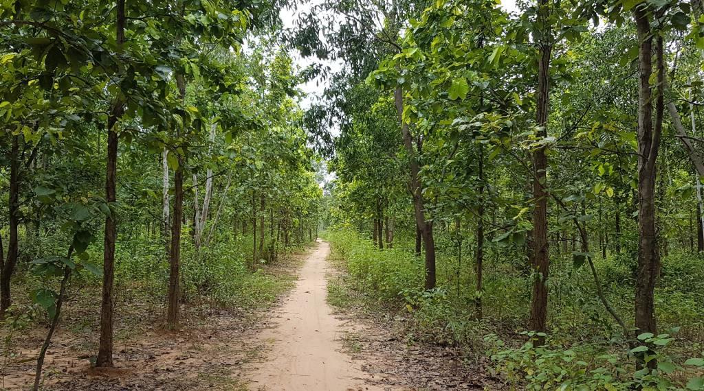 Joypur Jungle