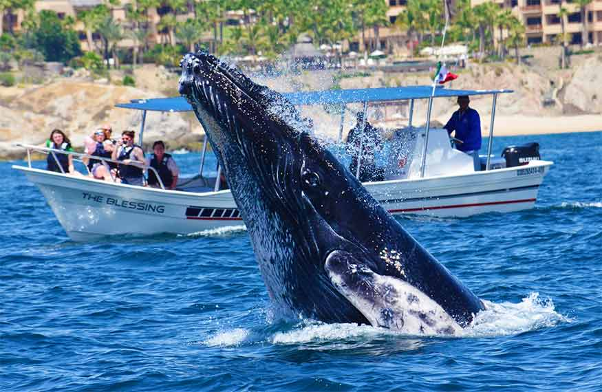 whale watching at Cabo San Lucas, Mexico