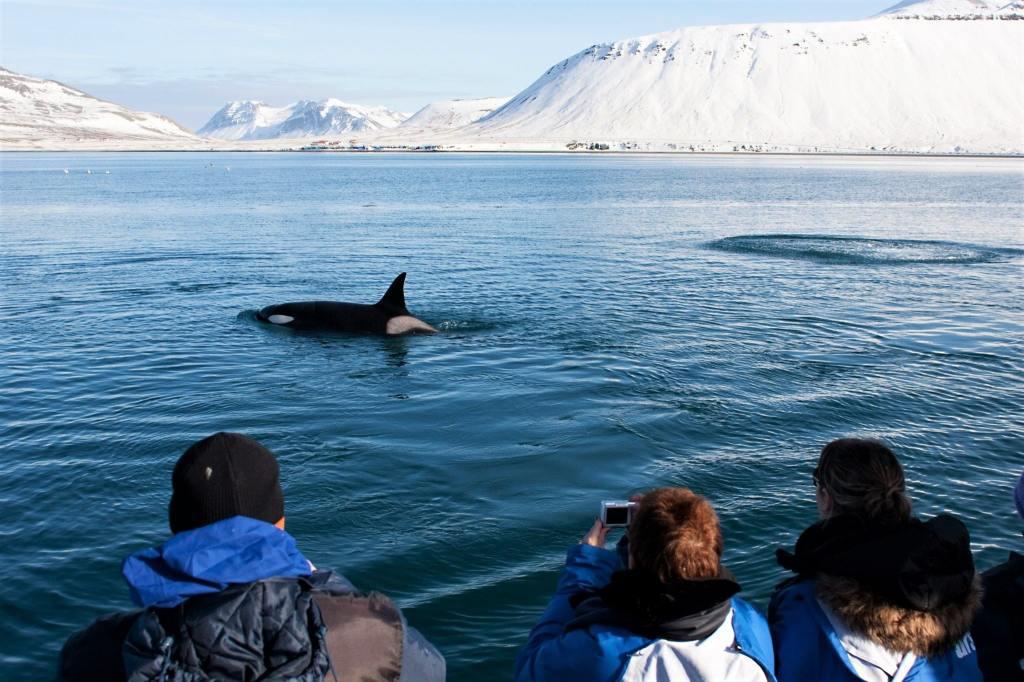 whale watching at Reykjavik And Huvasik, Iceland