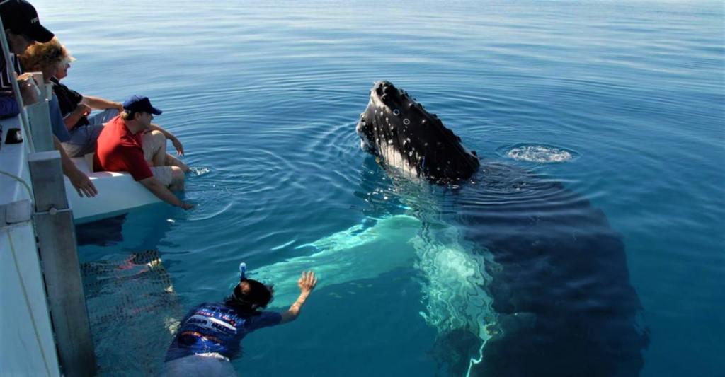 whale watching at Mirissa, Sri Lanka
